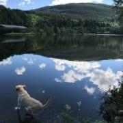 Natur pur in Norwegen
