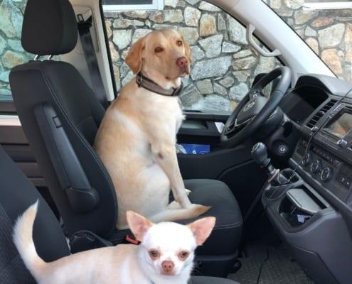 Verreisen mit Hunden